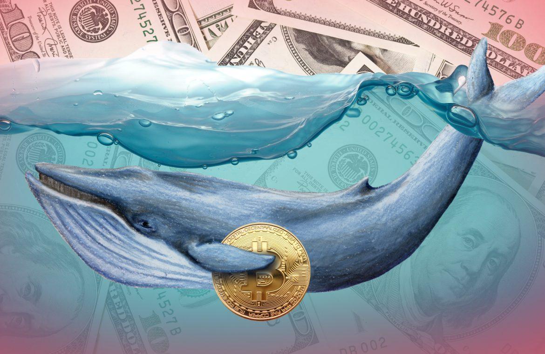 """Криптовалютный """"кит"""" провел трансакцию BTC на сумму 445 млн долларов"""